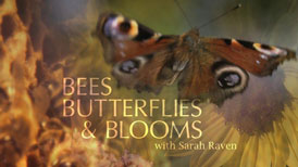 Bees Butterflies Blooms