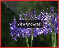 Environment showreel